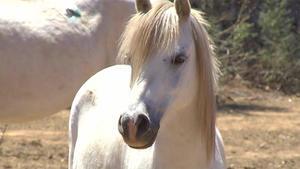 Thema u. a.: Gloria - Einsatz für Pferde