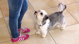 """Heute u.a. mit: Terrier-Mischling """"Henry"""""""