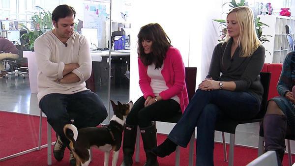 """Heute u.a.: Bürohund """"Rocky"""" sorgt für Chaos"""