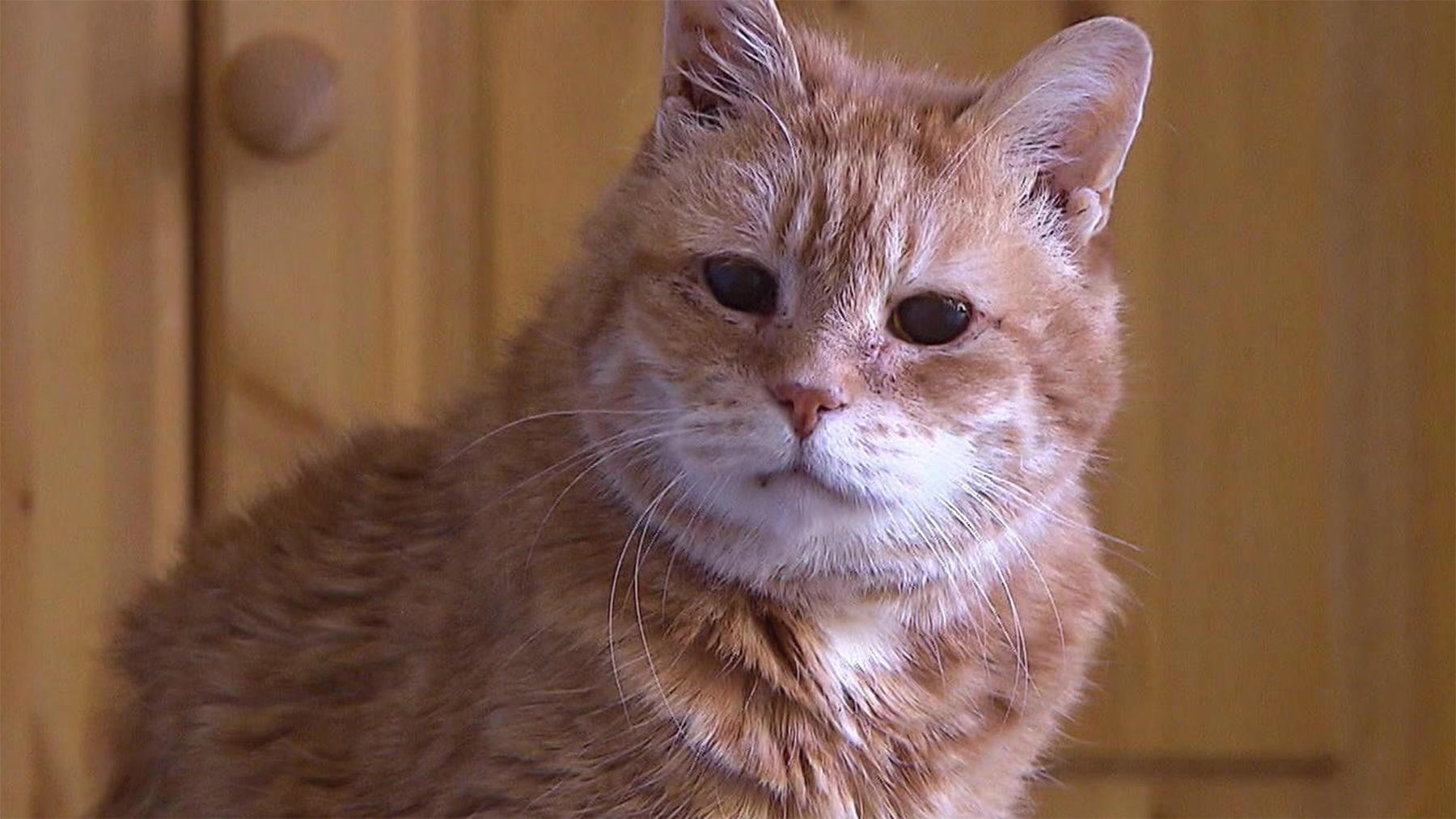 Thema u. a.: Wenn Katzen alt werden