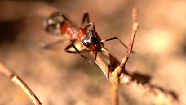 Thema u. a.: Ameisen umsiedeln