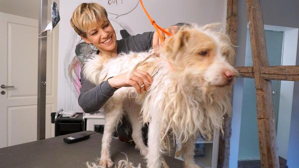 Thema u.a.: Die Hundeverschönerungsrubrik
