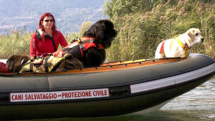 Thema u.a.: Italienische Schule für Wasserrettungshunde | Folge 1