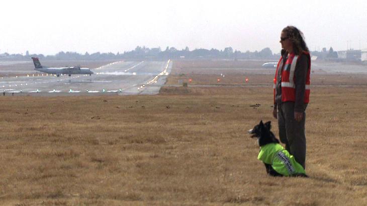Thema u.a.: Border Collies am Flughafen von Johannesburg   Folge 4