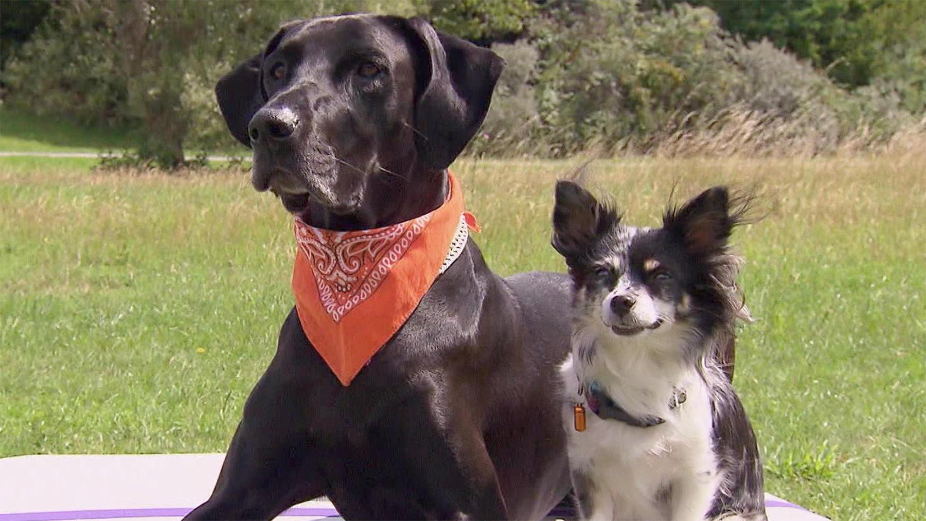 Thema u.a.: Dog Fitness - agil bis ins hohe Alter