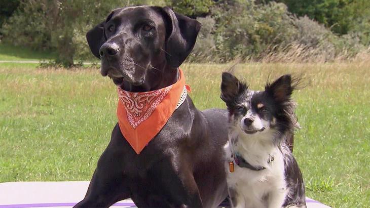 Thema u.a.: Dog Fitness - agil bis ins hohe Alter | Folge 36