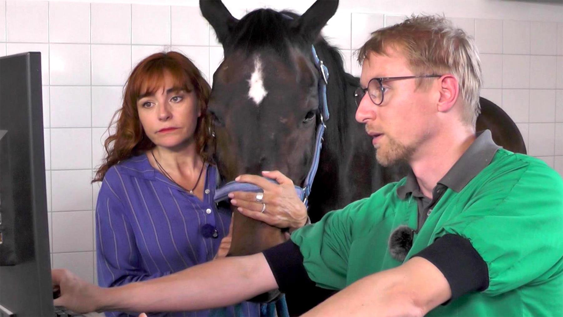 Thema u.a.: Prominenter Besuch beim Pferdezahnarzt