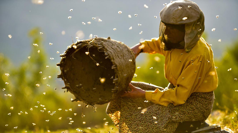 Land des Honigs im Online Stream | TVNOW