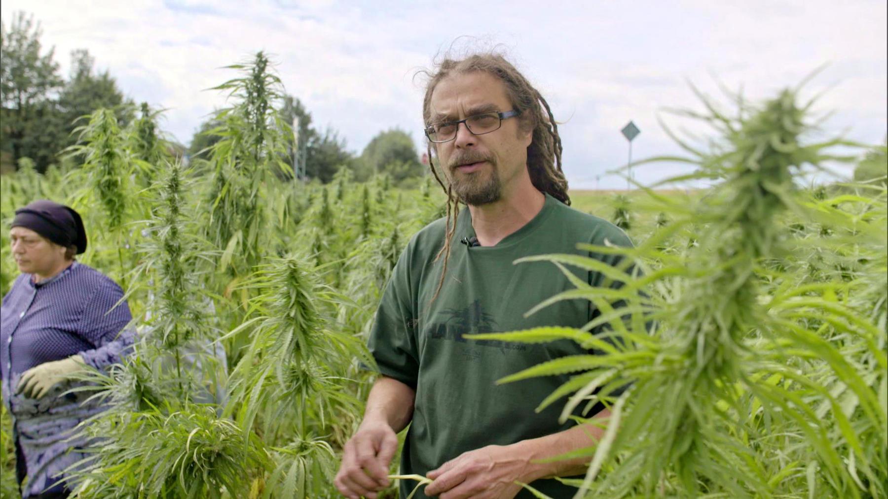 Cannabis - Droge oder Wundermittel?