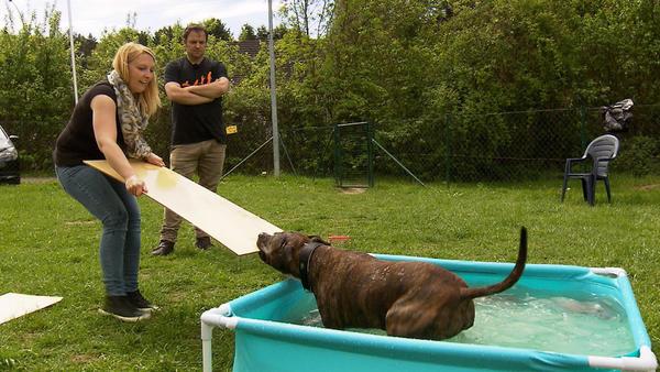 """Dogge """"Krümmel"""" / Staffordshire Terrier """"Buddy"""""""