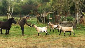 Thema u.a.: Wohin mit den geliebten Ziegen von Dina Appelbaum?