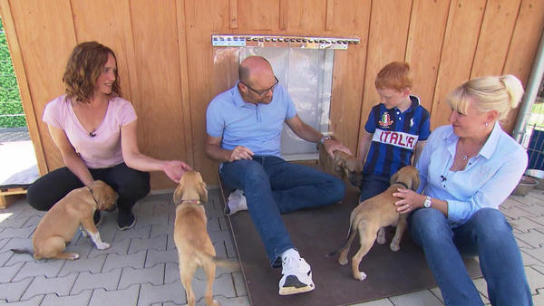 Thema u.a.: Die verrücktesten Hunde-Gadgets