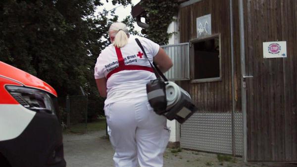 Freilaufen Pferde gefährden einen Rettungseinsatz