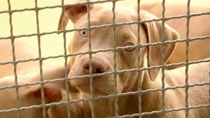 Heute: Ausnahmezustand im Tierheim Freital