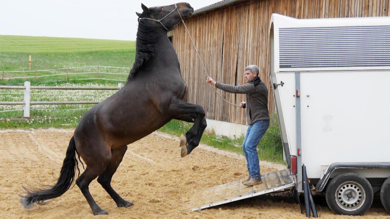 Die Pferdeprofis Neue Folgen 2021