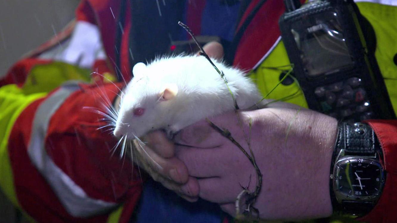 Folge 4 vom 25.02.2021 | Tierretter mit Herz | TVNOW