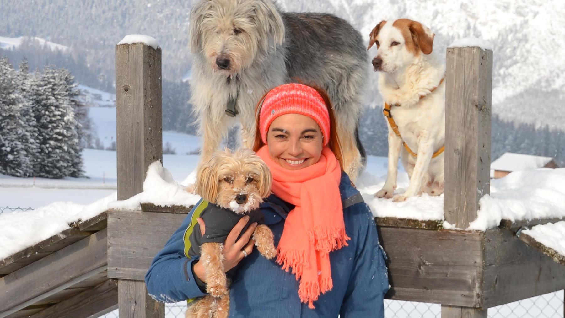 Winterirrtümer beim Hund