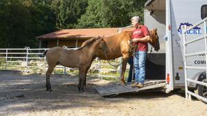 "Heute u.a.: Fohlen ""Cowboy"""