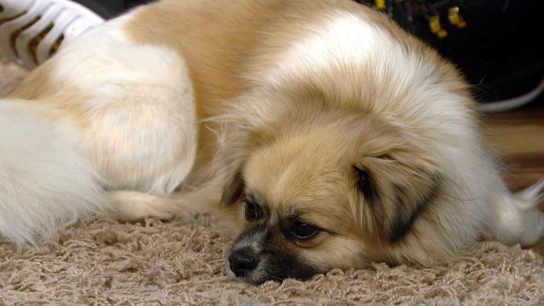Mischlingshund Bammy hat Probleme Baby Liam zu akzeptieren