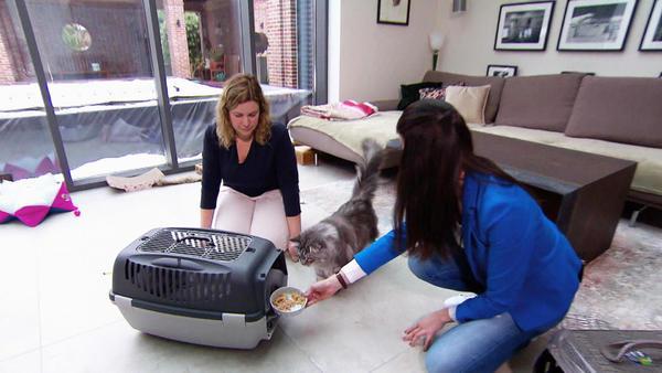 Thema u.a.: Cat to the Vet! Tierarzttraining für Katzen