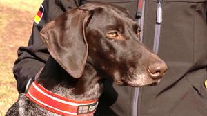 Thema u.a.: Der Zughundesport Dogscooter