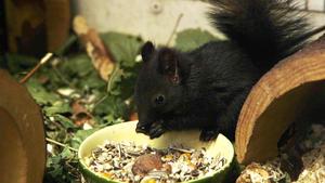 Heute: Eichhörnchen-Nachwuchs