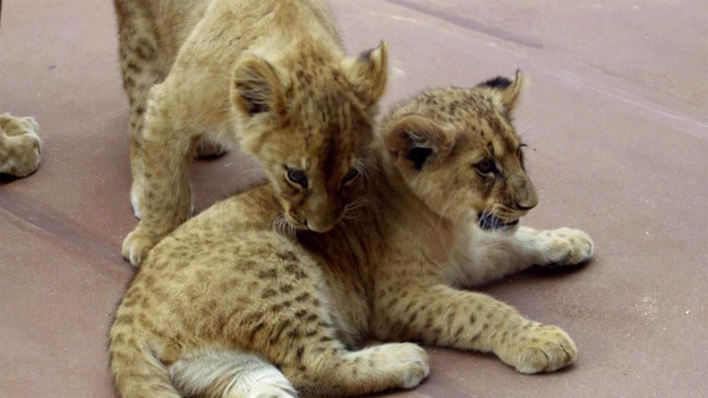 Folge 4 vom 29.05.2021   Tierbabys - süß und wild!   TVNOW