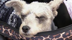 """Thema u.a.: Hund """"to GO"""" - Tragehilfen für laufschwache Hunde"""