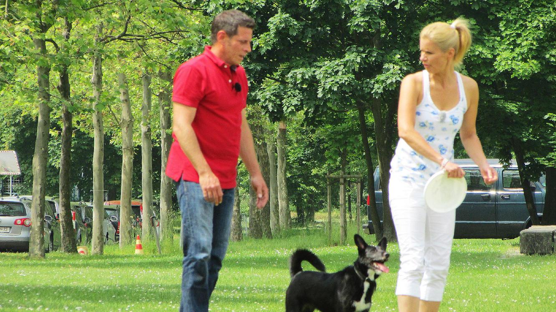 Folge 2 vom 3.07.2021 | Der V.I.P. Hundeprofi | Staffel 5 | TVNOW