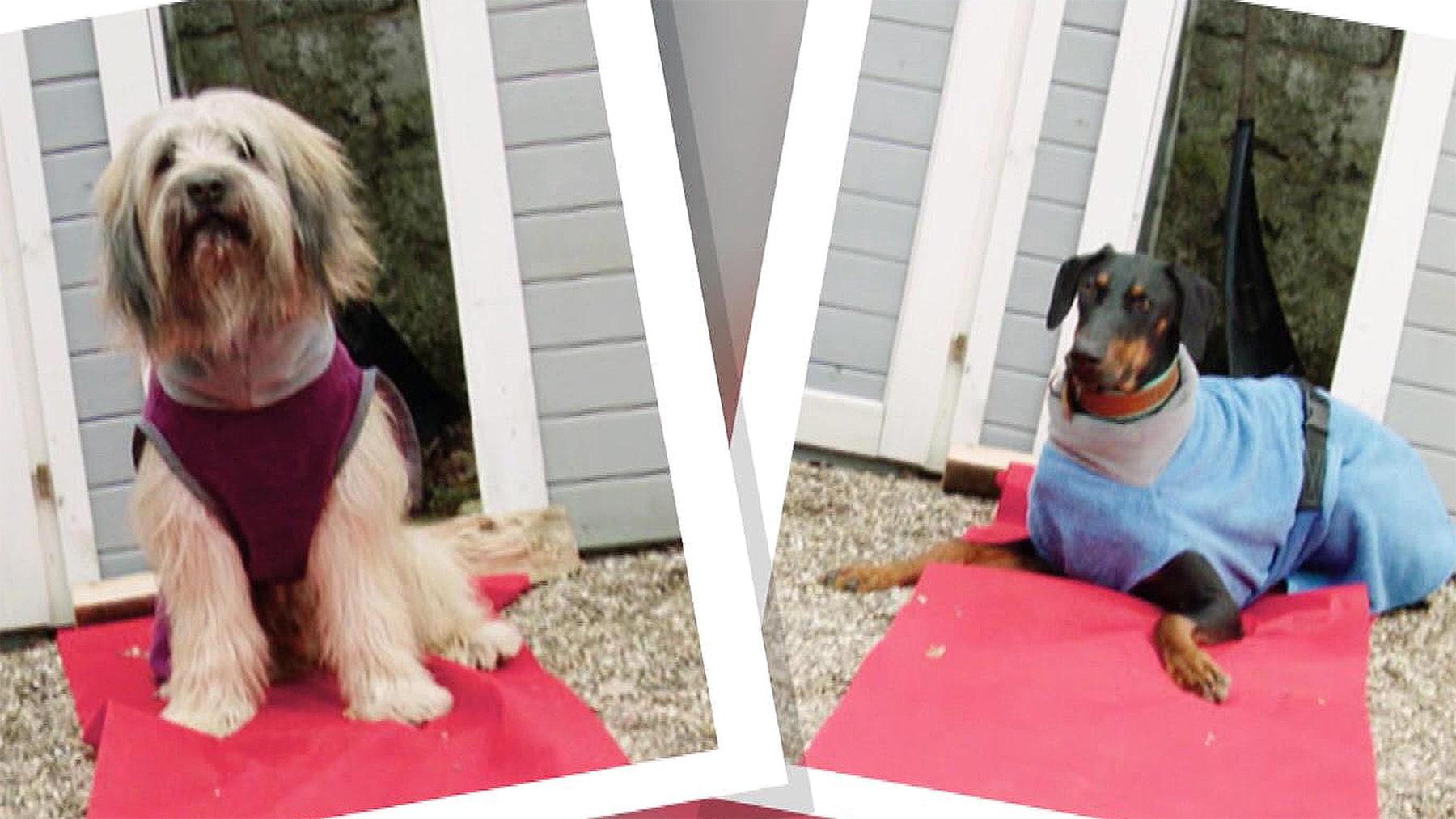Heute u.a.: Bademäntel für Hunde