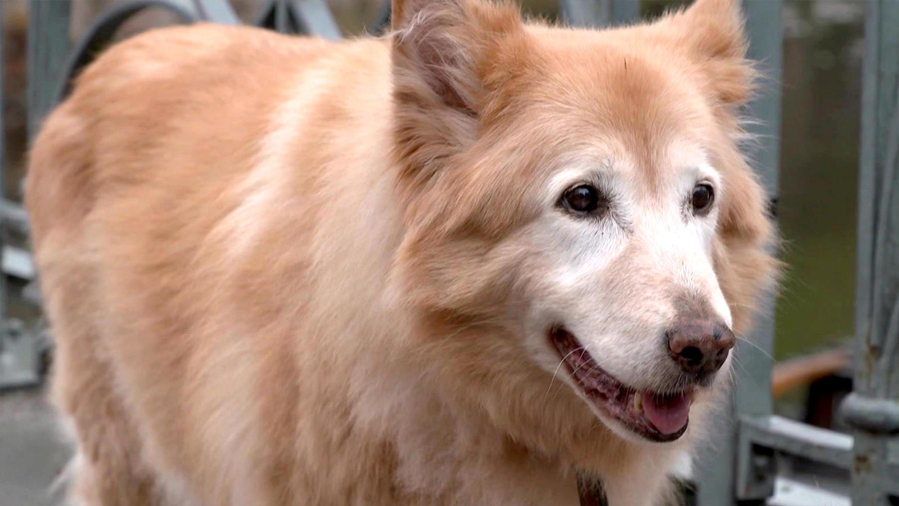 Thema u.a.: Hundegeruch