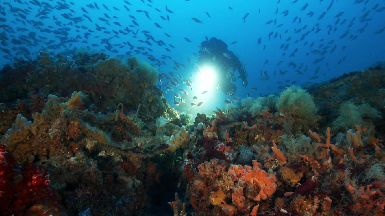28 Tage unter dem Mittelmeer - Station Bathyale im Online Stream   TVNOW