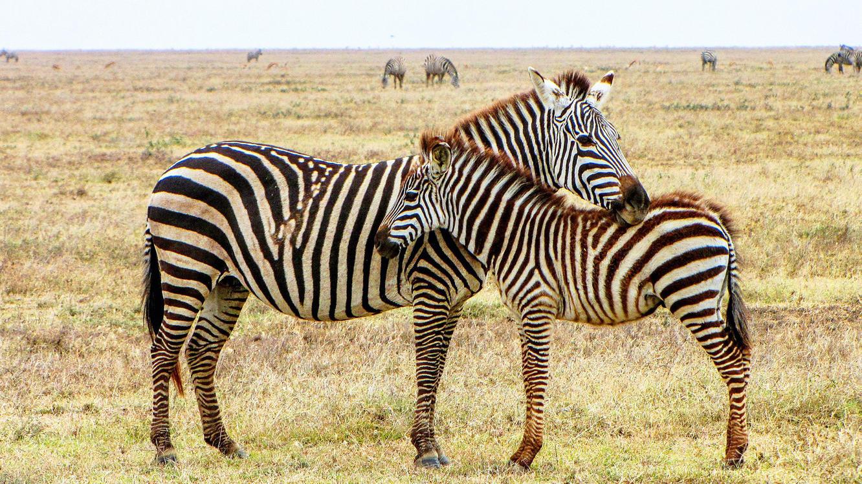 Folge 4 vom 1.09.2021   Tierische Titanen   Staffel 1   TVNOW