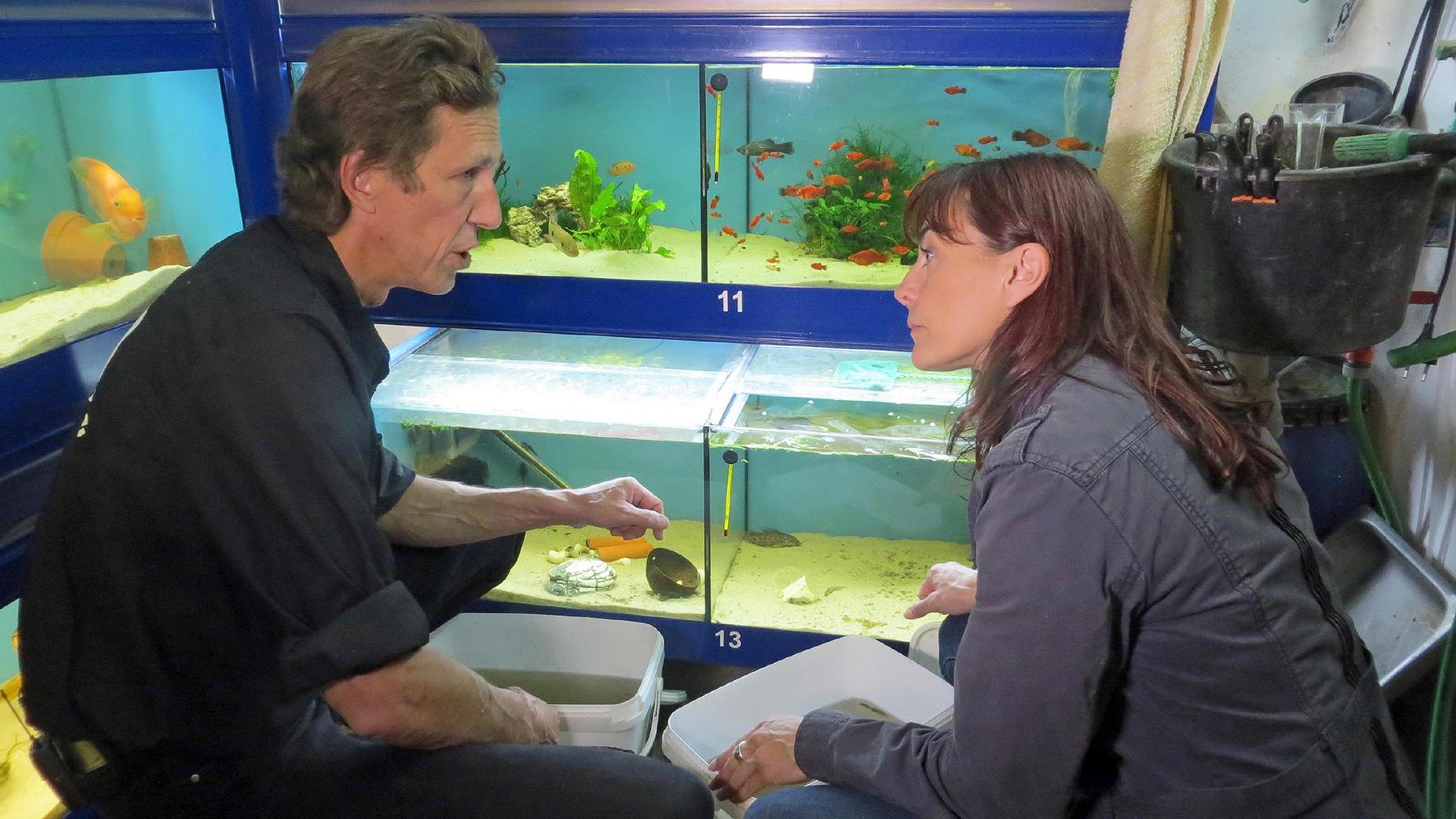 Fische aus dem Tierschutz