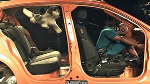 Sicherheit für Hunde im Auto