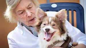 Ein Hund für eine Seniorin