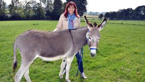 Bavarian Donkey Freaks